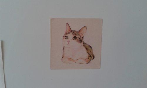 Наклейки с кошками с Алиэкспресс