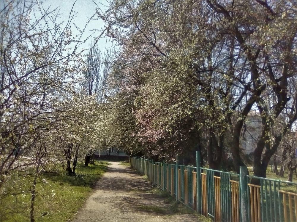 Весна в Майкопе